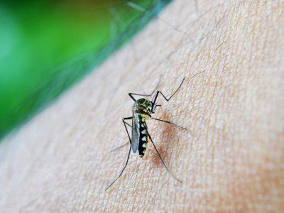 mosquito-213805