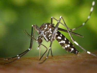 mosquito-49141_1920